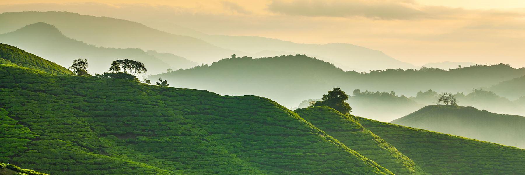 Visit Cameron Highlands, Malaysia