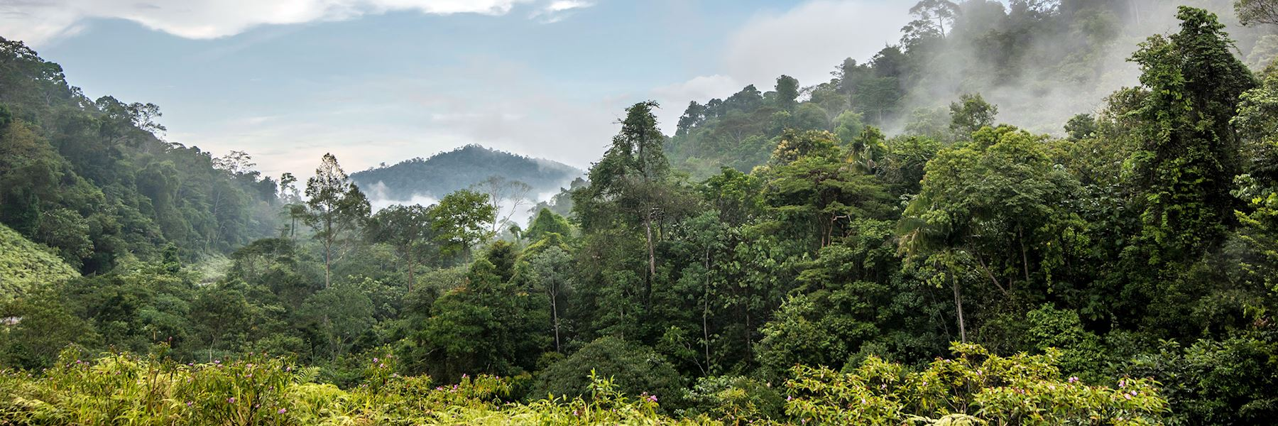 Visit Taman Negara National Park Malaysia Audley Travel