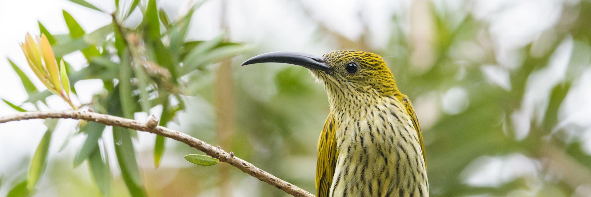 Birdlife at Fraser's Hill