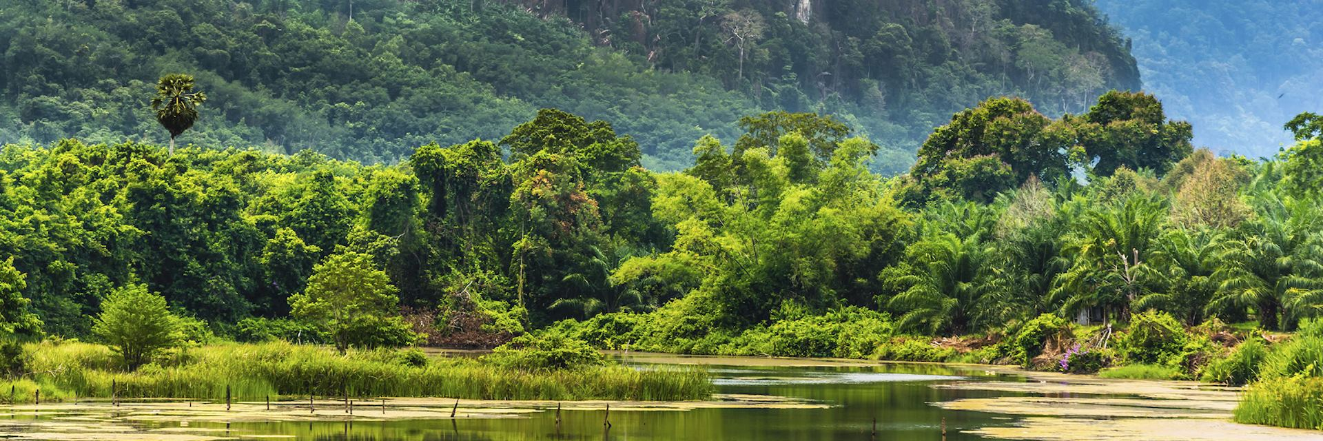 The tropical rainforest of Khao Yai National Park