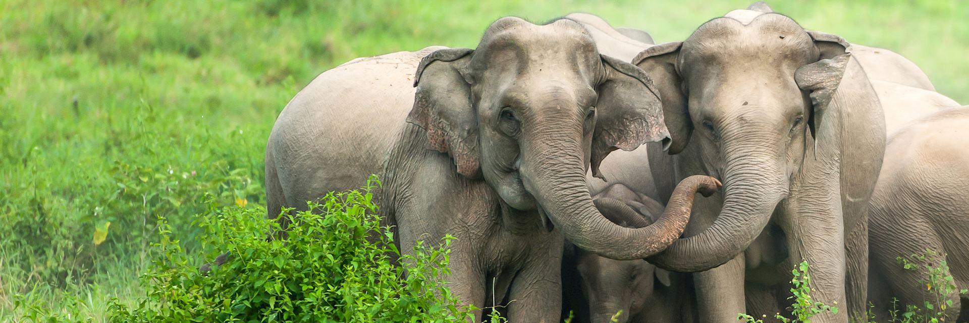 Elephant in Prachuap Khiri Khan, western Thailand