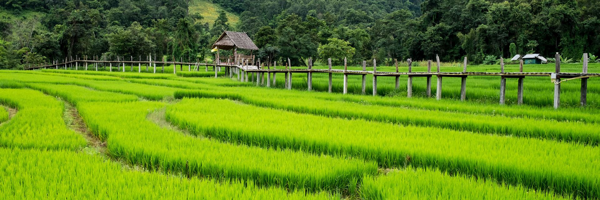 Rice fields near Pai