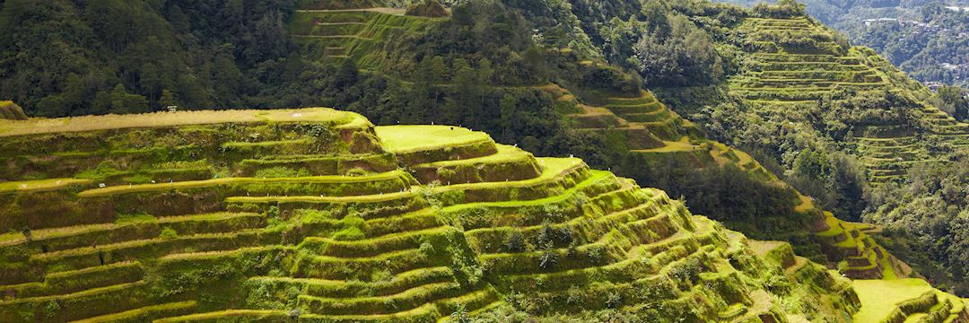 Rice terraces in Banaue, the Philippines