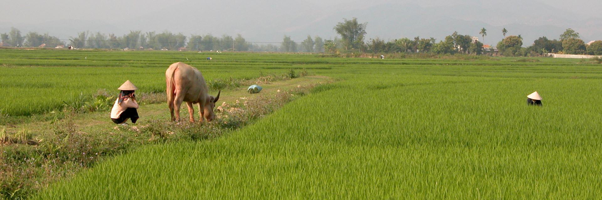 Life in Mai Chau