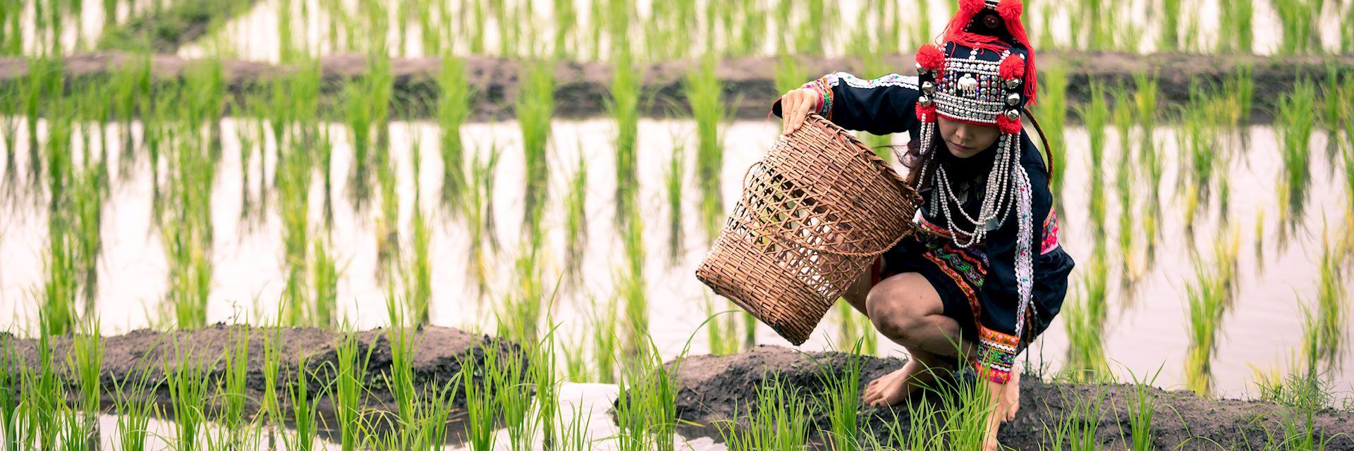 Hmong Woman planting rice