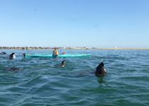 Chloe kayaking with seals at Pelican Point, Namibia