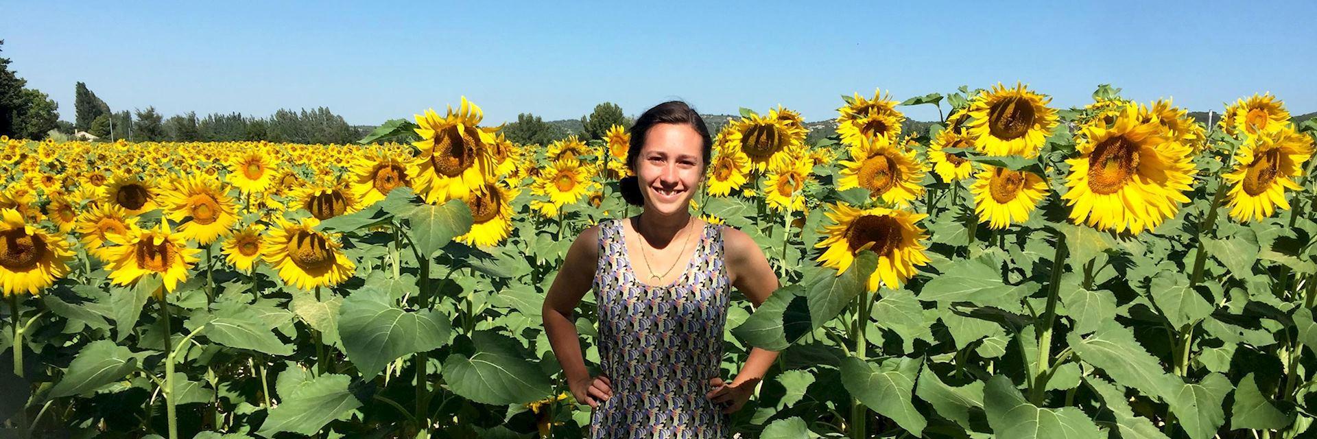 Careese in sunflower fields, France