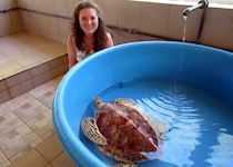 Annabel at the Turtle Centre at Le Meridien, Bora Bora, French Polynesia