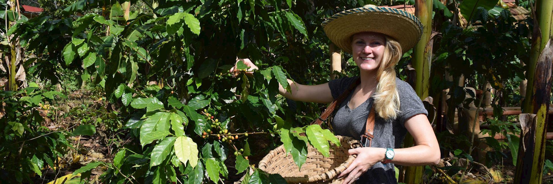 Alison coffee picking, Cuba