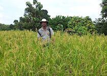 Alex trekking through sticky rice fields in Luang Prabang, Laos
