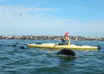 Seal Colonies at Pelican Point near Walvis Bay, Namibia